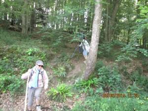 Trans la Forêt (29)