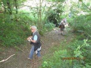 Trans la Forêt (30)