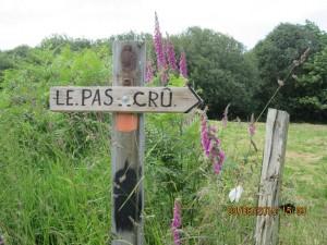 Trans la Forêt (53)