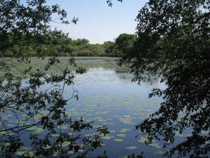 étang de Fayelle