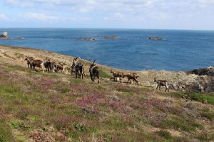 Ouessant Yves (117)