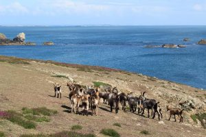 Ouessant Yves (119)