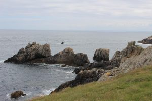 Ouessant Yves (203)