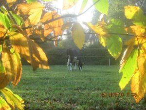 vache broutant sous un soleil automnal!!!
