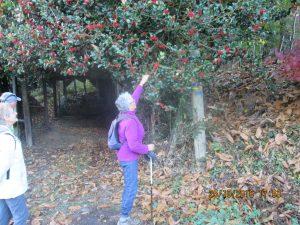 Denise n'a pas pu s'empêcher de cueillir une branche de houx! magnifique!