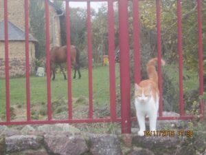 animaux de compagnie!!