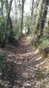 un plaisir de marcher dans ces sentiers forestiers!
