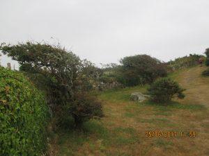 Cotentin (100)
