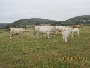 Cotentin (53)
