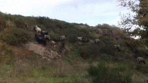 le top de l'escalade pour les biquettes!!