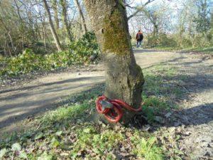 on ne touche pas à mon arbre !!!!