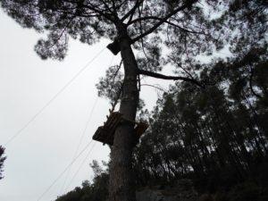 l'accro-branche